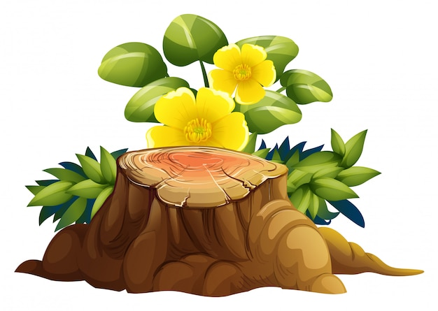 Yellow flowers and stump on white background