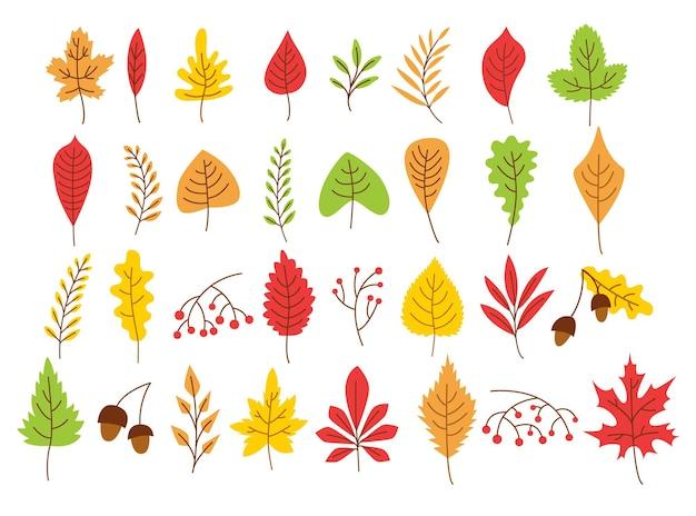 Желтые, зеленые и коричневые осенние листья различных растений
