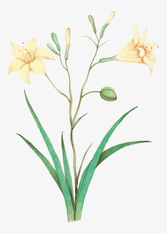 Yellow lily in vintage style