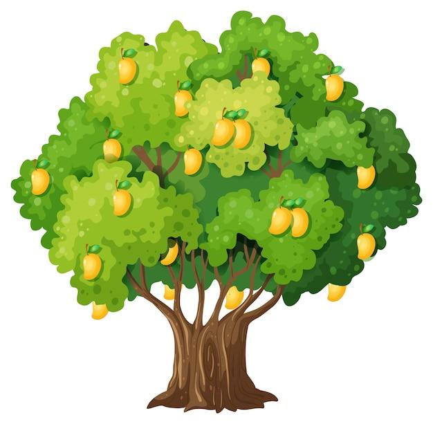 흰색 배경에 고립 된 노란색 망고 나무