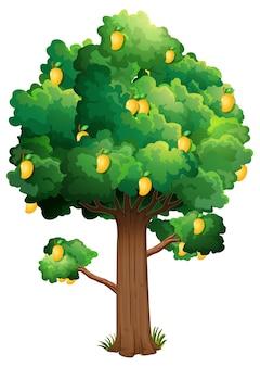 Желтое дерево манго, изолированные на белом фоне