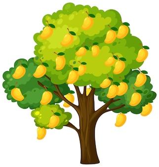 白で隔離される黄色のマンゴーの木