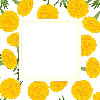 Yellow marigold on white banner card