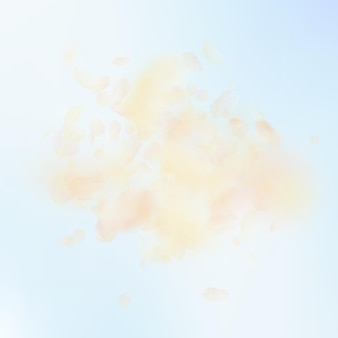 노란색 주황색 꽃잎이 떨어지고 있습니다. 놀라운 로맨틱 꽃 폭발입니다. 푸른 하늘 사각형 배경에 비행 꽃잎입니다. 사랑, 로맨스 개념입니다. 매력적인 청첩장.