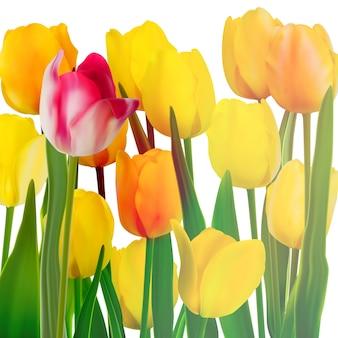 Карточка желтых тюльпанов.