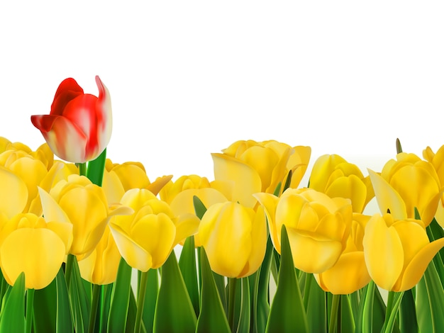 Yellow tulips and one red.