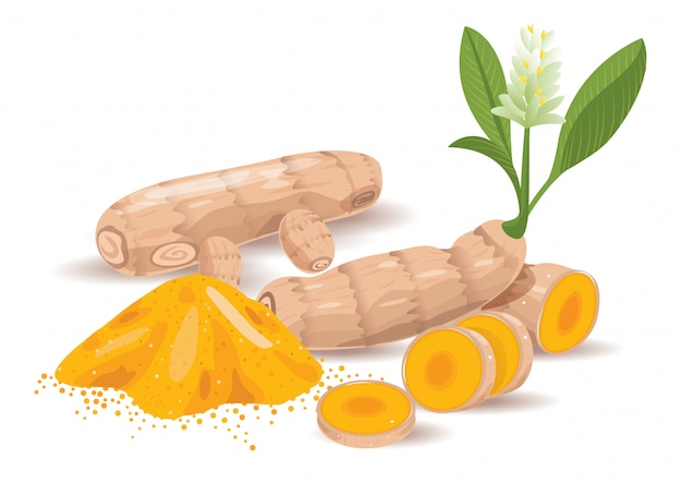 Yellow turmeric herb