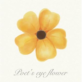 Yellow watercolor poet's eye flower isolated