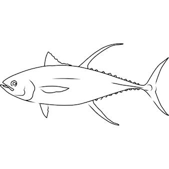 Yellowfin tuna hand sketched hand drawn vector clipart