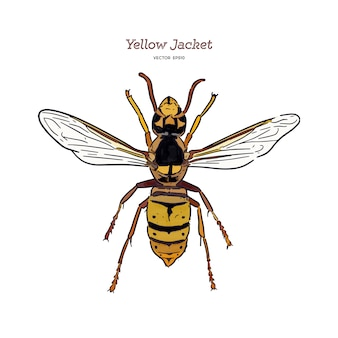 Yellowjacket is about a type of wasp. hand draw sketch vector.