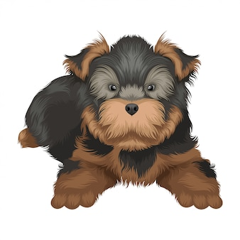 Yorkshire terrier dog illustration