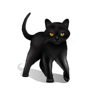 Young black realistic domestic cat isolated on white background