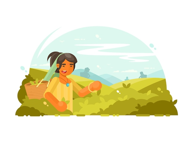 Young boy collects green tea leaves on plantation.  illustration