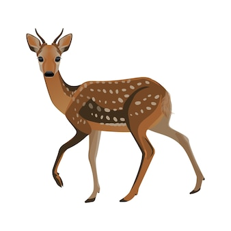 Молодые оленины с короткими рогами и коричневым пушистым мехом с небольшими белыми пятнами, на тонких ногах с копытами. лесной парнокопытный зверь.