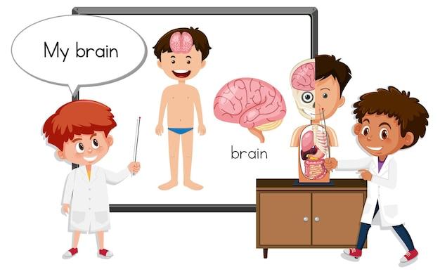 뇌 해부학을 설명하는 젊은 의사