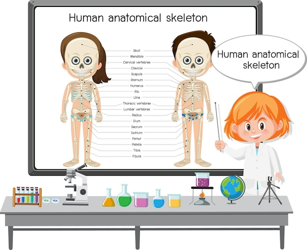 人間の解剖学的骨格を説明する若い医者