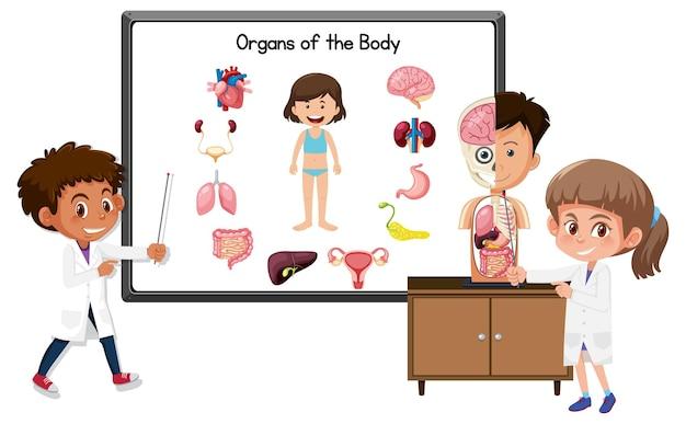 体の臓器を説明する若い医者