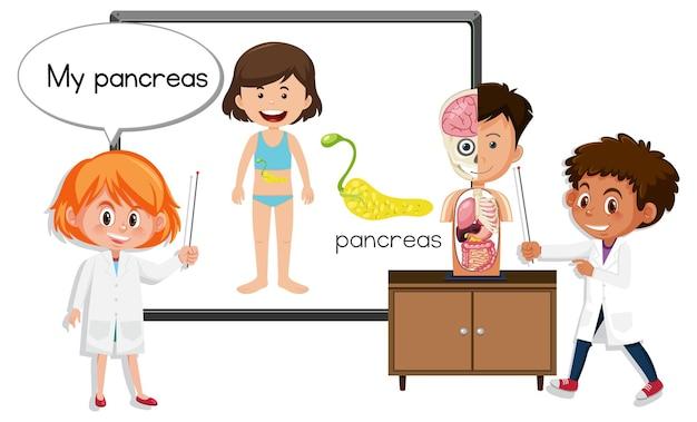 췌장 해부학을 설명하는 젊은 의사