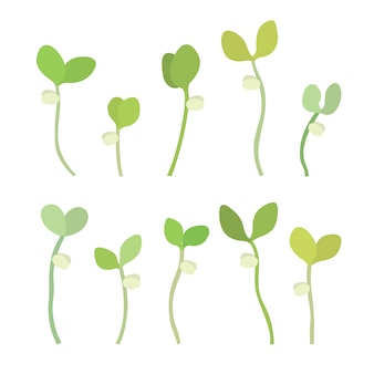 Young fresh single green sprouts vector illustration