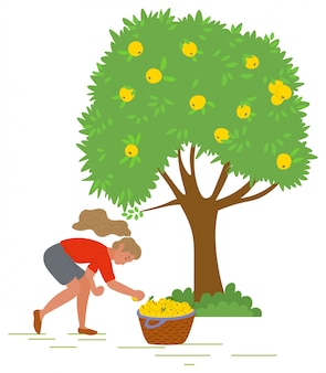 Young girl picking yellow apples vector image