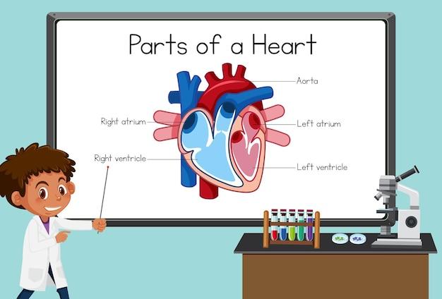 実験室でボードの前で心臓の部分を説明する若い科学者