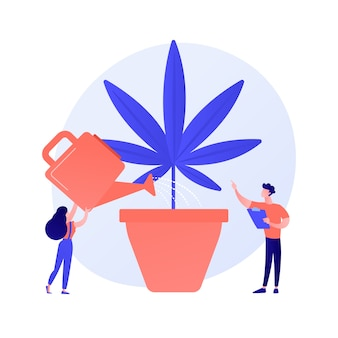 Young woman watering hemp plant, forbidden houseplant. marijuana cultivation, medical cannabis, illegal horticulture. girl growing weed. vector isolated concept metaphor illustration