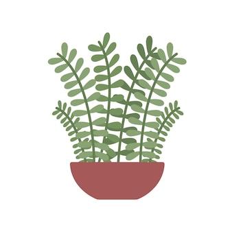 Zamioculcaszamiifoliaまたはzz植物の家セラミック土鍋家またはオフィスガーデン