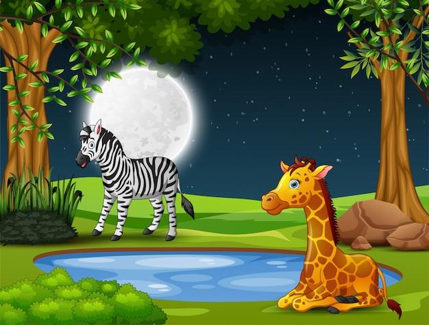 A zebra and giraffe enjoying nature at night