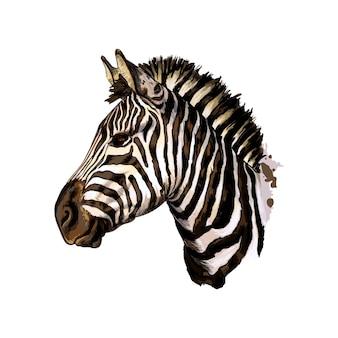 Портрет головы зебры из всплеска акварели, цветной рисунок, реалистка. векторная иллюстрация красок