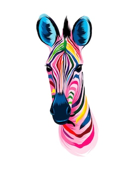 Zebra head portrait from multicolored paints splash of watercolor colored drawing realistic