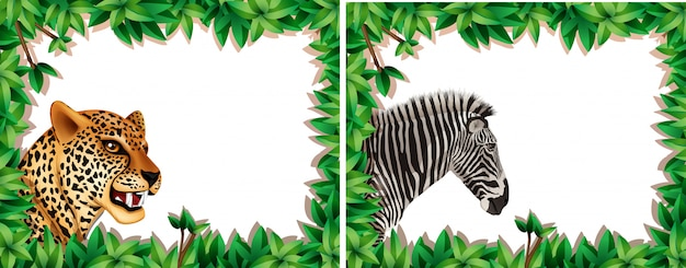 Zebra and leopard on nature frame