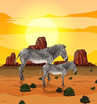 Zebra nell'illustrazione della natura