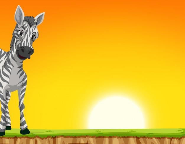 A zebra on sunset background
