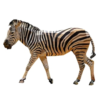 Zebra walking on geometric pop art with a white background