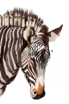 Zebra watercolor illustration