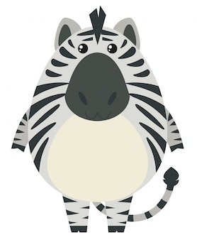 Zebra with round body