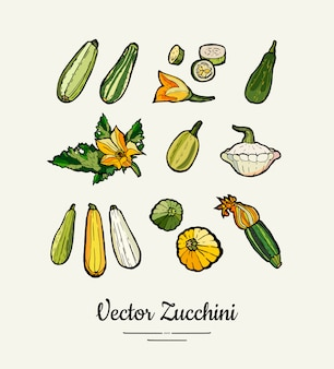Цуккини рисованной иллюстрации, иллюстрации сквош. изолированный зеленый цуккини для вегетарианца