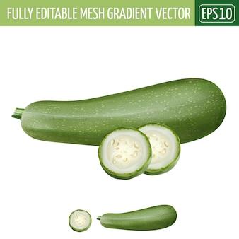 Zucchini illustration on white
