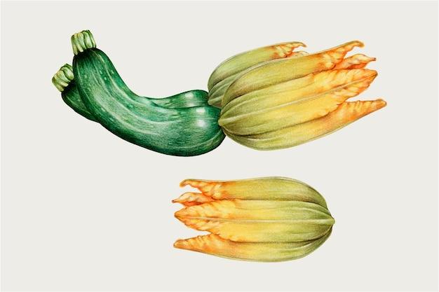Zucchine in stile disegnato a mano