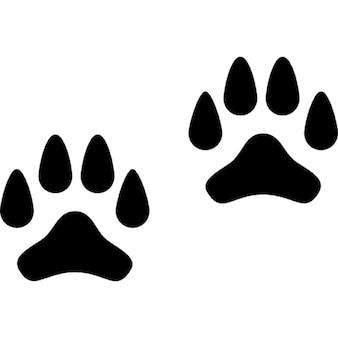 Pfotenabdrücke eines Hundes