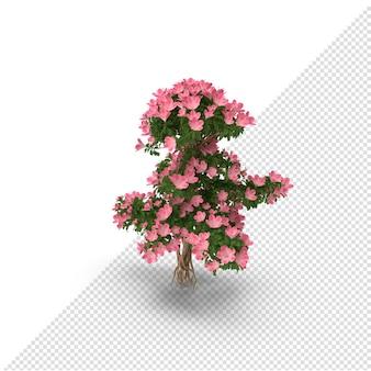 3d bonsai baum mit blumen isoliert