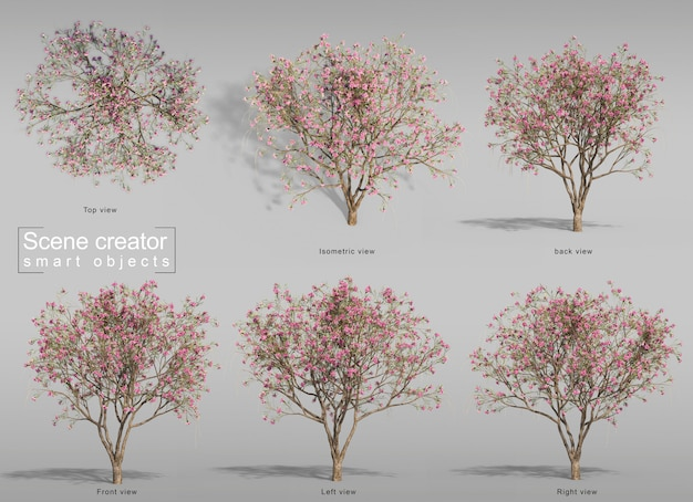 3d-darstellung des wüstenweidenbaums