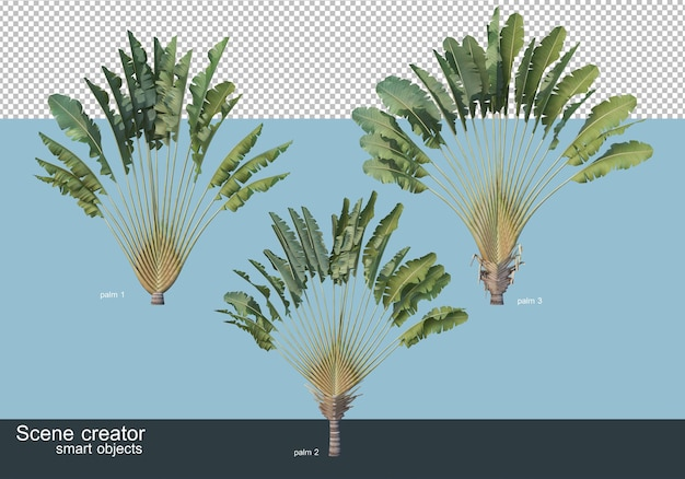 3d-darstellung verschiedener arten von palmen