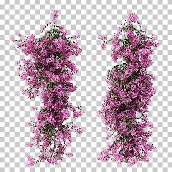 3d-darstellung von bougainvillea