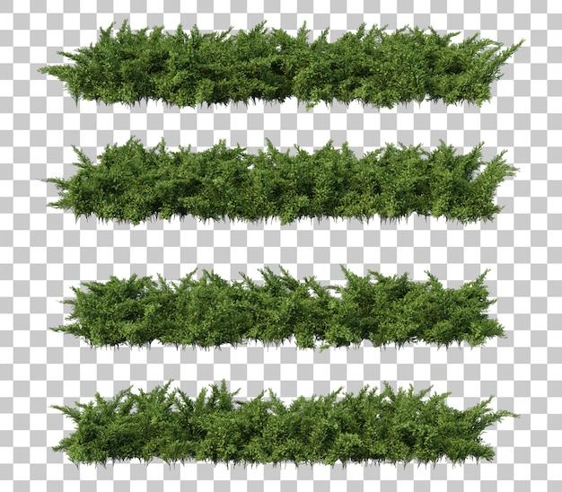 3d-darstellung von creeping juniper