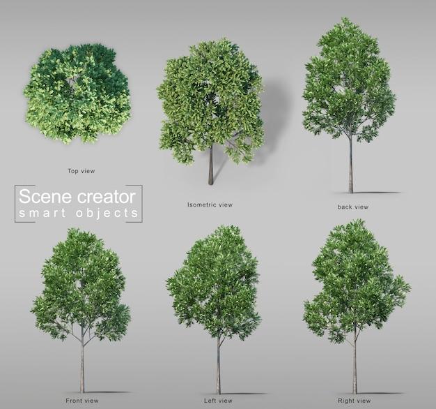 3d-darstellung von karottenholzbäumen
