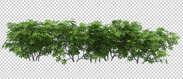 3d render brush tree isoliert