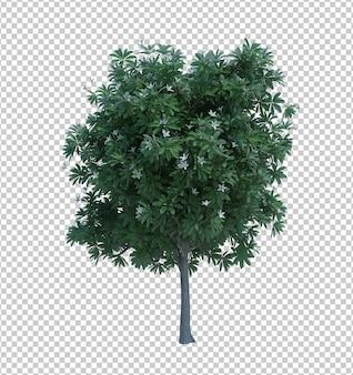 3d-rendering naturobjektbaum isoliert Premium PSD