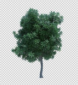 3d-rendering naturobjektbaum isoliert