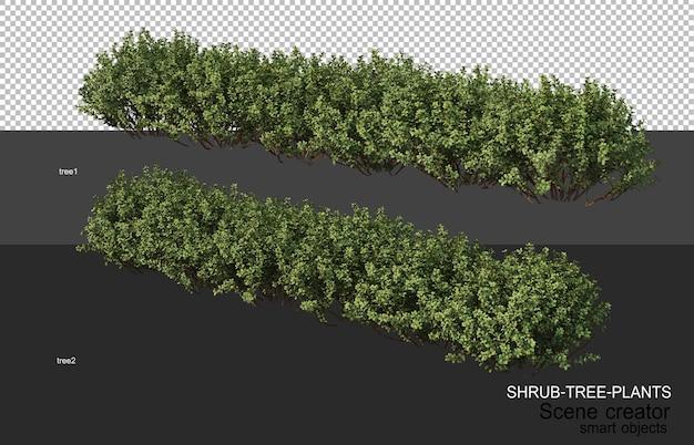 3d-rendering verschiedener arten von strauchlayouts